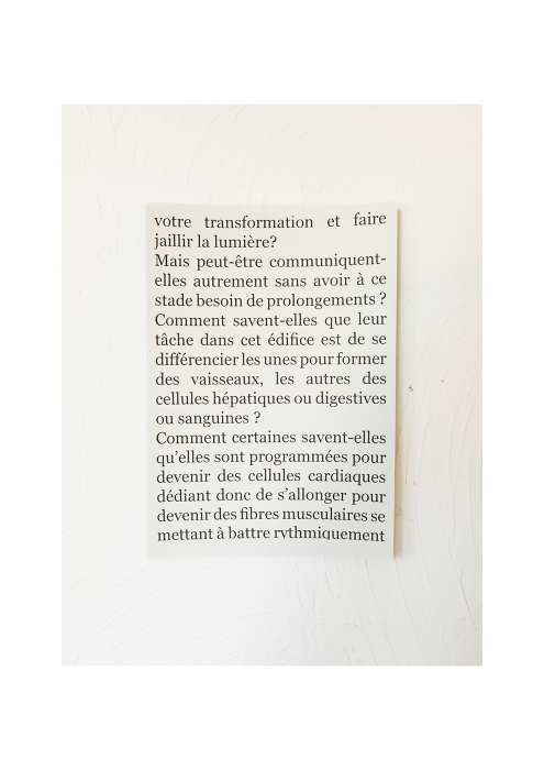 http://dorianteti.com/files/gimgs/th-16_Dorian Teti Rose 27.jpg