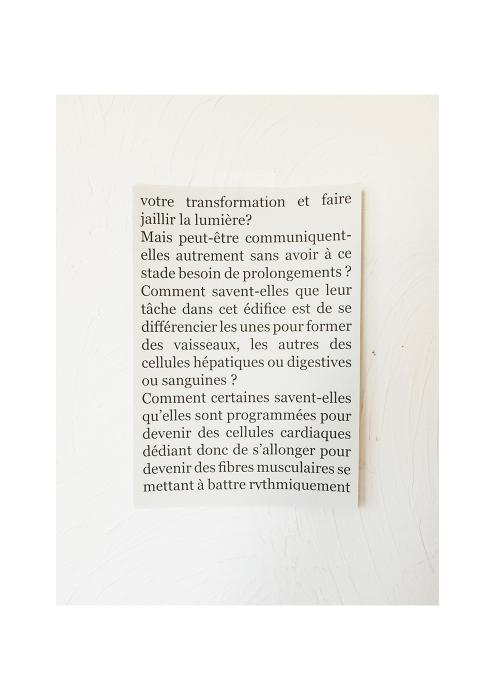 https://dorianteti.com:443/files/gimgs/th-16_Dorian Teti Rose 27.jpg